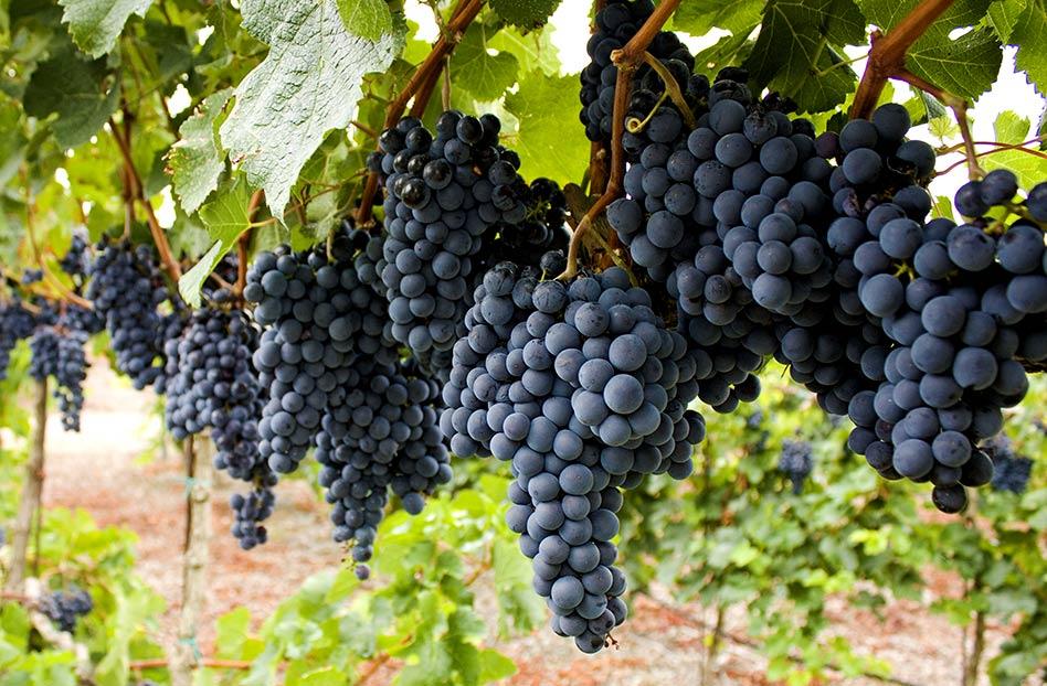 Saltillo – sorprendente región vitivinícola